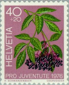 Znaczek: Black Elder (Sambucus nigra) (Szwajcaria) (Pro Juventute: Medicinal plants of the forest) Mi:CH 1085,Sn:CH B444,Yt:CH 1015,Zum:CH J258