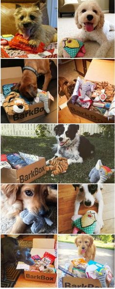 Elephants and tigers and bearded ladies...oh my! The July BarkBox was a (flea) circus and it's time for some chew toy acrobatics. Treat your pup to a monthly delivery of the best pup-approved treats and all-natural toys, with surprise monthly themes you can both enjoy.