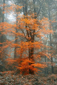 Beautiful surreal alternate color fantasy Autumn Fall forest landscape by Matt Gibson. Nature Landscape, Forest Landscape, Fantasy Landscape, Landscape Photos, Landscape Paintings, Landscape Photography, Nature Photography, Photography Ideas, Photos Black And White