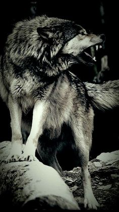 Wild,fierce and wonderful