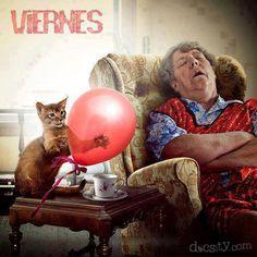 Por fin es #Viernes!! Despierta!! #docsity #gato #humor