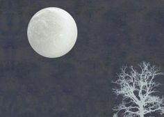 moonlight moon tree night blackandwhite Hologram, Moonlight, Gallery, Metal, Authenticity, Language, Posters, Night, Poster