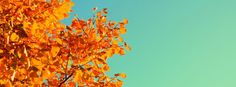 Autumn Colors Tree and Sky Facebook Cover