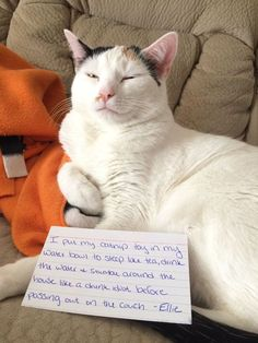 BEST Cat Shaming Hilarious Laughing Pictures It's onto it ! Funny Animal Memes, Funny Cat Videos, Cute Funny Animals, Funny Animal Pictures, Funny Cute, Hilarious, Fat Funny, Funny Memes, Bad Cats