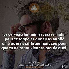 Funny Fun Facts, Quote Citation, Hilario, How To Speak French, French Quotes, Geek Humor, Bad Mood, Amazing Quotes, True Stories