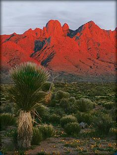 Another shot of the GORGEOUS Organ Mountains near Las Cruces!