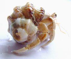 Do Hermit Crabs Eat Dog Food