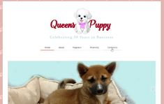 Puppies for Sale Queen, NY. Puppies are checked by a Licensed Veterinarian before we sell them. Responsive Web, Bichon Frise, Puppies For Sale, Shih Tzu, New York City, Nyc, Pets, New York, Animals And Pets