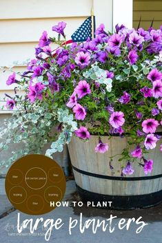 Planting large planters can feel intimidating. You want them to be big and beautiful and make an impact. Picking the right flowers is actually really easy! Grass Drawing, Potato Vines, Purple Sweet Potatoes, Barrel Planter, Modern Homesteading, Large Planters, Complimentary Colors, Hobby Farms, Grow Your Own Food