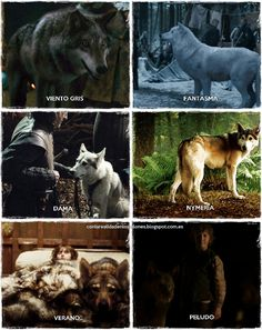 1000 images about game of throne direwolves on pinterest game of thrones geek culture and so sad. Black Bedroom Furniture Sets. Home Design Ideas