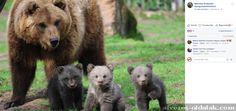 Lássuk (vagy lessük?) a medvét! — Medveles kétszer... - Kamu/Átverős Oldal Listázó