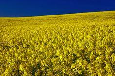 sembradíos de flores - Buscar con Google