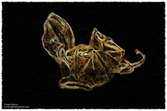 MONSTER FROM THE DEEP. http://www.liveeachadventure.com/our-own-original-digitalart-images/