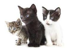 """Résultat de recherche d'images pour """"chats"""""""