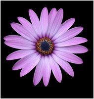 aster tattoo | Flower Tattoo favourites by rockingmarauder on deviantART