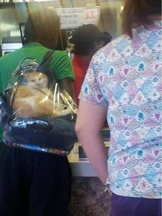 Cat in a clear backpack  - Shop Online :) @ www.AmericasMall.com