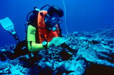 Reef survey, Cambodia | Dive, travel and volunteer for Marine Conservation at www.frontiergap.com | #dive