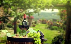 The Beauty of Red Wine - A Beginner's Guide Grape Wallpaper, Food Wallpaper, Wine Vineyards, Wine Packaging, Liquor, Harvest, Fruit, Red Wines, Red Wine