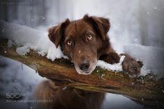 winterdreaming by anne_geier #animals #pets #fadighanemmd