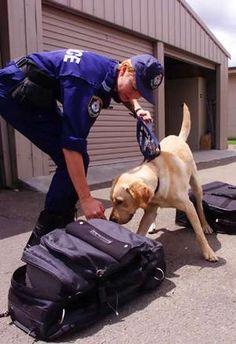 cani poliziotto foto | Tutto Zampe 6819