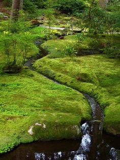 Мох в ландшафтном дизайне садов: фото красивых идей с декоративным мхом