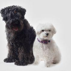 Al final nos quedamos con la foto. Nuestros dos amigos llevan el mismo modelo de collar. Palabrita  #dogs #perros #dogcollar #cats #gatos #lunares #pet #petcollar #yingyang #blackandwhite #moda #fashion #perrosdeinstagram