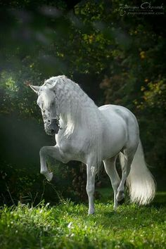Gorgeous Andalusian  !!