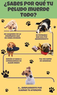 ¿Sabes por qué tu perro muerde todo? I Love Dogs, All Dogs, Cute Dogs, Dressage, Jack Russell Terrier, Tarzan, Fox Terrier, Betta, Puppies Tips