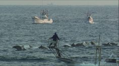 Column: Let's finally put an end to dolphin hunting By Wayne Pacelle and Joel Manby Wednesday, September 28, 2016 3:12pm / Dolphin hunters off the coast of Taiji, Japan, kill the marine mammals after using noise to herd them toward shore.The Cove Copyright Oceanic Preservation Society