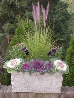 Fall planter with cabbage, mums, pansies, ivy, fountain grass, and heather.