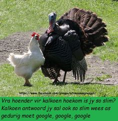 Hilarious, Funny & Sexy has members. Welkom by Afrikaner humor en witt, hilarious and funny pics (ADULTS Lees asseblief die reels van. Funny Thanksgiving Memes, Only Connect, Turkey Images, Goeie More, Funny Sexy, Laugh At Yourself, Turkey Hunting, Set You Free, Animal Quotes