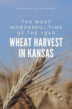 John Deere Combine, Low Humidity, Golden Harvest, Wheat Fields, Living Magazine, Summer Is Here, Family Affair, Kansas