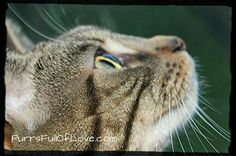 My cat photography