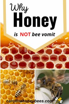 NO! Learn why honey is not bee vomit, bee poop, bee barf or anything else that is disgusting. Honey is made from plant nectar collected by honey bees #carolinahoneybees