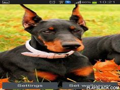 Doberman  Android App - playslack.com , Doberman - if you like canines then these live wallpapers are for you. pretty pinschers will decorate the screen of your smartphone or tablet. The app has easy settings and power saving mode.