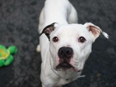 My name is MAX. My Animal ID # is A0991957.