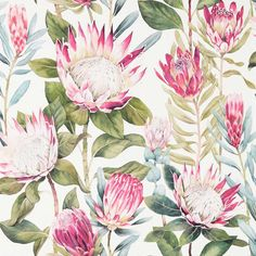 Inspired by an original Sanderson archive document, the majestic flowerheads of the King Protea plant have been faithfully interpreted and recoloured to create this stunning statement wallpaper.Extra wide & Half match: please call for quantity advice. Cream Wallpaper, Print Wallpaper, New Wallpaper, Fabric Wallpaper, Wallpaper Roll, Wallpaper Samples, Protea Plant, Protea Flower, King Protea