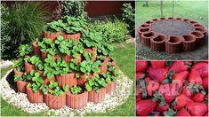 Čisté jahody: pěstování   Prima nápady Creative, Outdoor Decor, Home Decor, Dyi, Gardening, Gardens, Garden Landscaping, Plants, Lawn And Garden