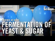 Fermentation of Yeast & Sugar - The Sci Guys: Science at Home - YouTube