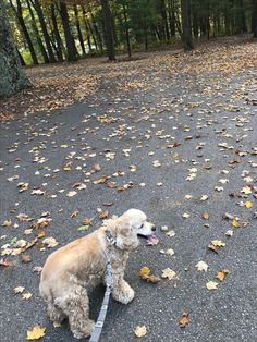 Barry Sanders out on a walk on this beautiful fall day...Oscoda, MI