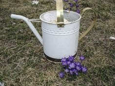 An old watering can next to a new purple crocus.