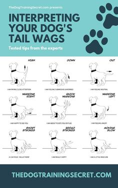 How To Read A Dog& Body Language To Learn .- Wie man die Körpersprache eines Hundes liest, um das Lernen zu verbessern – The… How To Read A Dog& Body Language To Improve Learning – TheDogTrainingSec … – Nala – - Background Grey, Dog Body Language, Reading Body Language, Easiest Dogs To Train, Dog Facts, Dog Training Tips, Training Classes, Training Academy, Potty Training