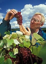 Grape Growing Guide   5 Fail-Safe Practices-This is a great article with tons of information.