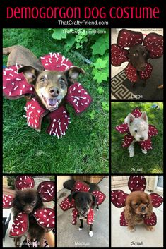 Now your dog can be a Demogorgon Dog Too. Whether it be for Halloween, the Stranger Things Premier, or just to make your dog extra creepy this costume is sure to turn your dog from cute and cuddly into a frightful Demogorgon Dog! Puppy Halloween Costumes, Stranger Things Halloween Costume, Cute Dog Costumes, Halloween Inspo, Dog Halloween, Stranger Things Halloween Decorations, Puppy Costume, Demogorgon Costume, Girl And Dog