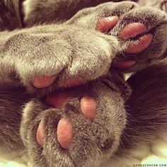 3:5 LOVE REPRESENTED kittie paws. soft and sweet. but they also hold the sharp claws of a fierce predator.   life.