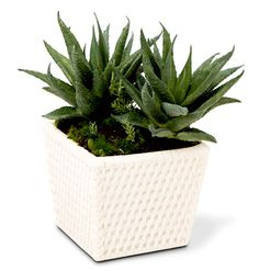 Veja aqui 5 sugestões de plantas que purificam o ar e ajudam a deixar a sua casa mais leve e livre de poluentes!