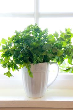 The flat-leaf has more flavor than curly parsley and is preferred for cooking, while dried parsley has little flavor at all. before use, wash parsley in warm water instead of cold - herbs will smell better. Matches well with: chicken, eggplant, eggs, fish, game, lentils, mushrooms, mussels, pasta, peas, potatoes, poultry, rice, seafood, tomatoes, zucchini, lemon.