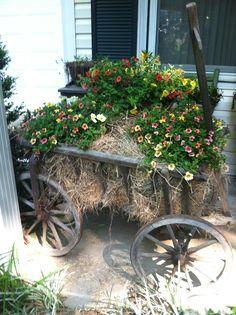 old goat cart