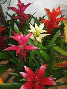 107 Meilleures Images Du Tableau Fleurs Tropicales Tropical