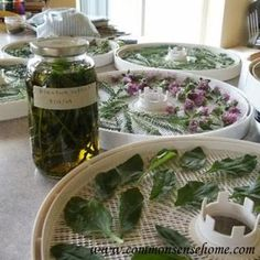 How To Make Your Own Homegrown Medicinals | Health & Natural Living
